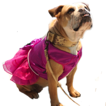 PUG - Pink dress w pearls