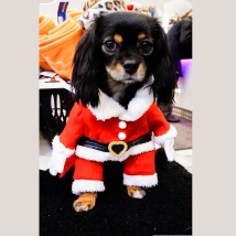 Santa 2-legged Costume
