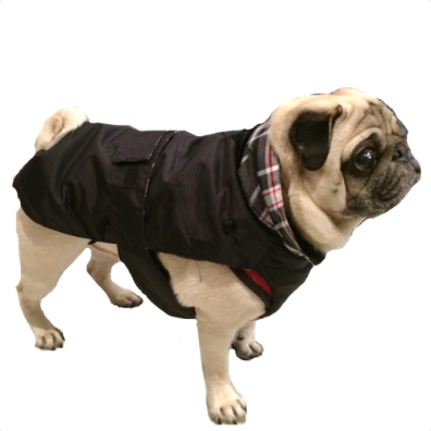 Pug/FrBulldog Black Trench w. detachable lining