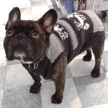 Askja Dog Sweater
