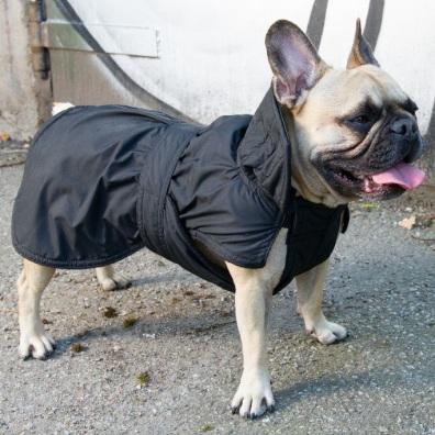 Black Bulldog Coat