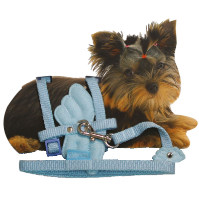 Tiny - Puppy Set nylon adjust. harness & Leash 20-29cm x 10mm - Angel Wings Blue