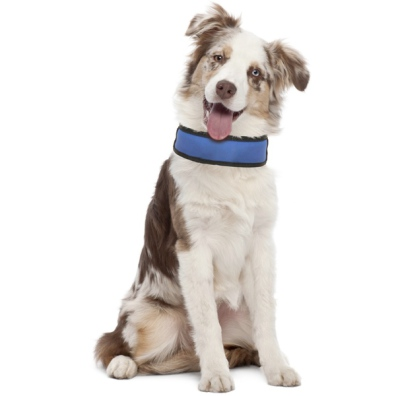 Cooling Adjustable Collar - To Freeze Before Usage