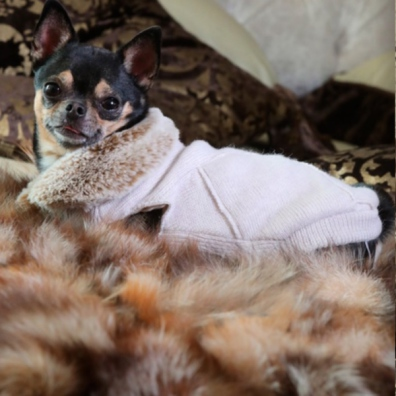 Angy Knitted Sweater with Fur Collar - Cream