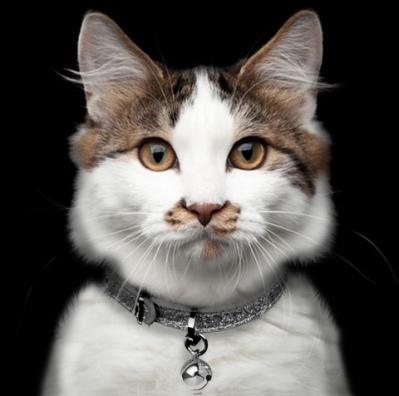 Cat Collar Stardust - Titan